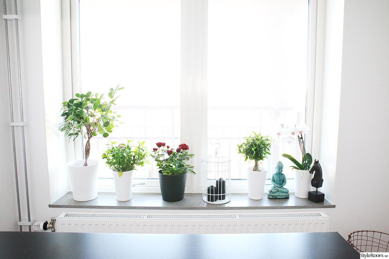 Bild på dekoration fönster   kök av hanna33