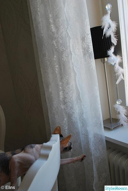 fönsterdekoration,fjädrar,spets