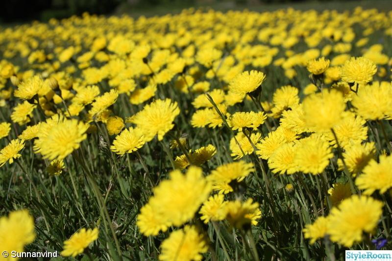 gräsmatta,sunnanvind