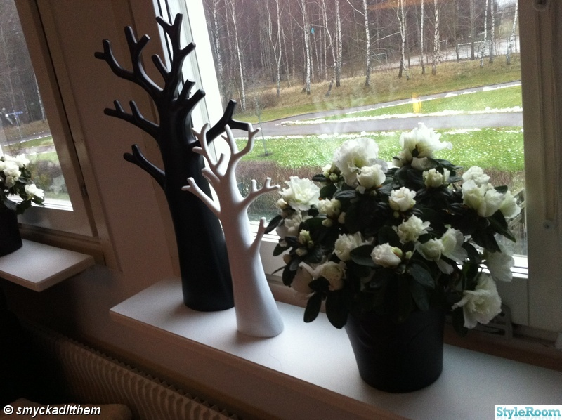 fönster,kruka,vitt,svart,blomma