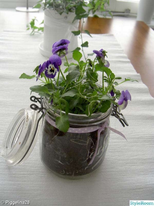 blommor,kök,glasburk,sidenband,penseer
