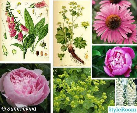 blommor,planering,trädgård,rabatt,planeringsarbete