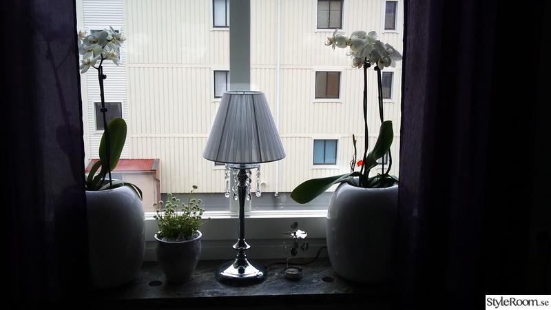 krukor,orkidé,dekoration,lampa