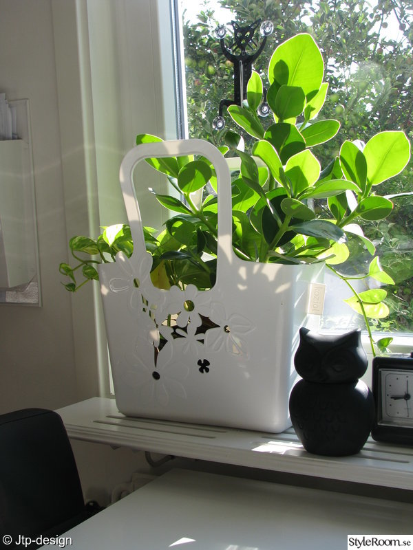 klocka,grönt,uggla,sparbössa,växter