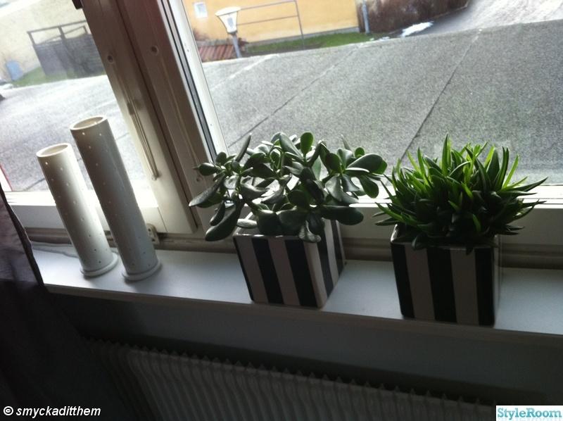 fönster,kruka,fönsterlampa