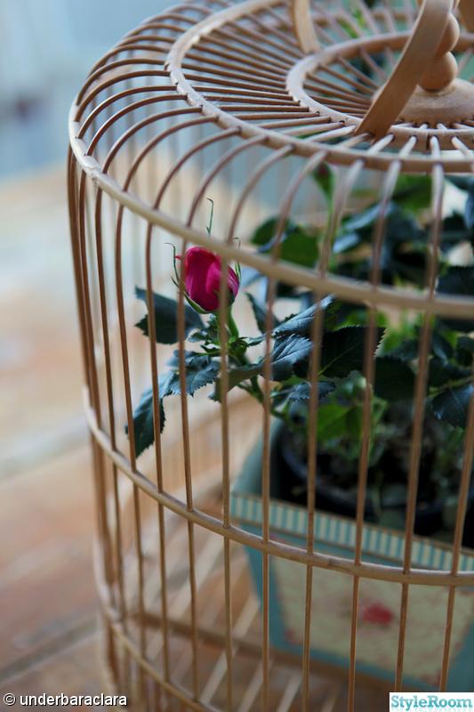 fågelbur,loppis,rosor