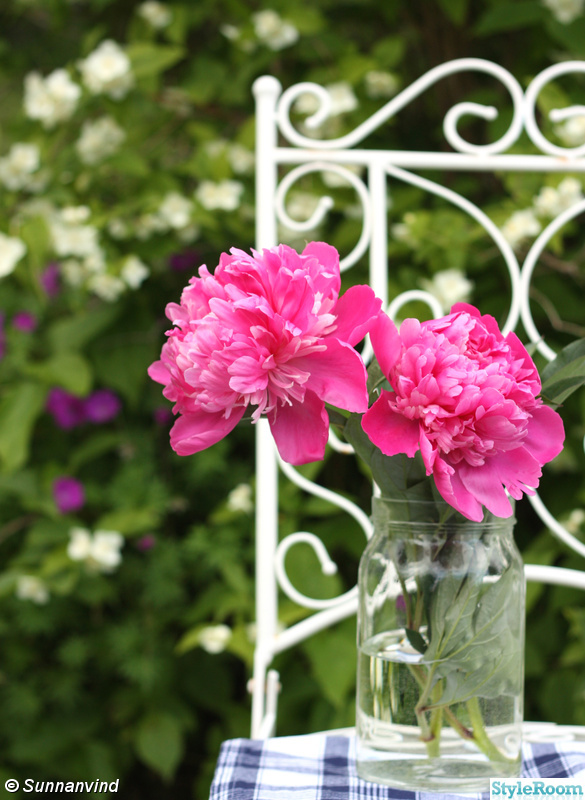 stol,stilleben,romantiskt,trädgårdsmöbler,pion