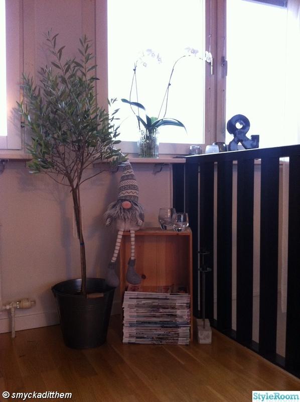 orkidee,tidningar,olivträd,trädlåda