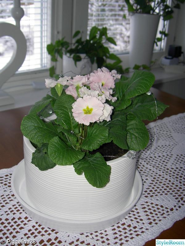 blommor,vit kruka,kök