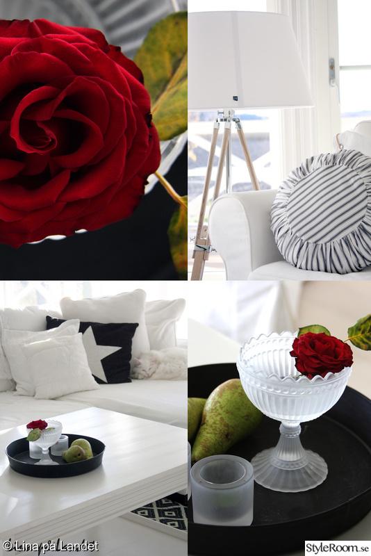 rosor,skål,kudde,lampa