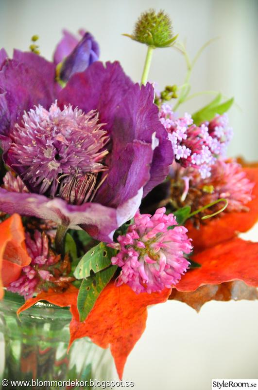 blommor,höst,bukett,lila blommor,hötlöv