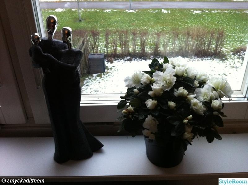 fönster,kruka,blomma,prynadspar