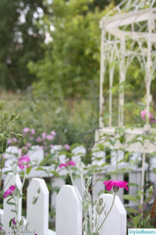 blomställning,sunnanvind,vitt staket