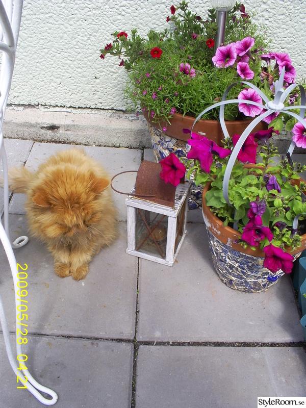 Lilla Katt Nude Photos 93