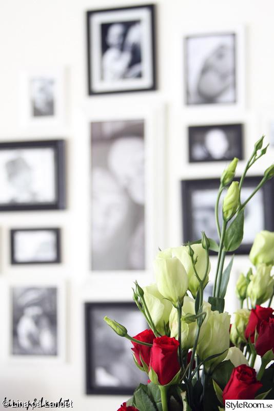 fotovägg,rosor,blommor