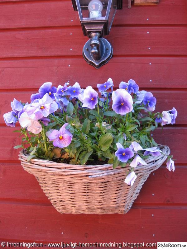 blommor,trädgård,sommar