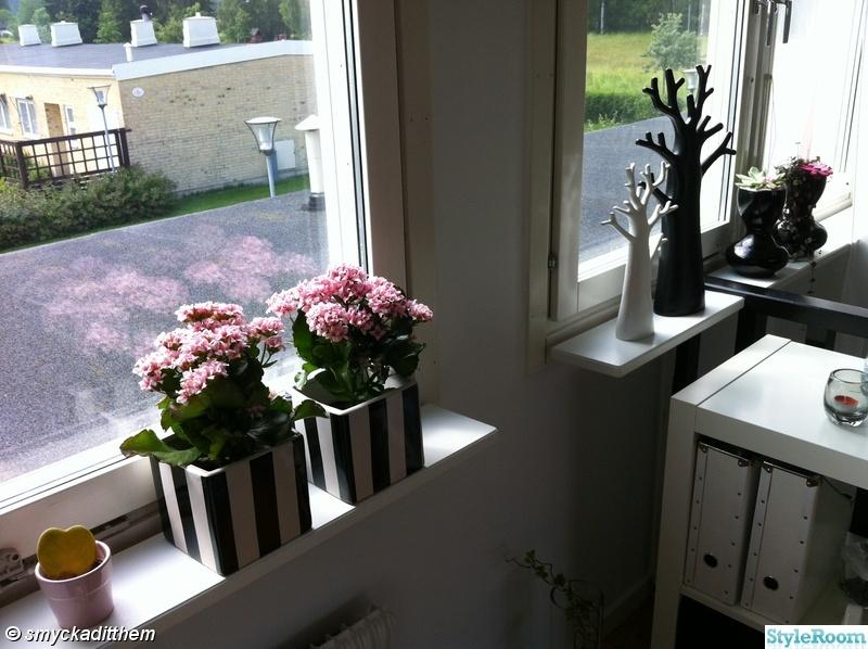 rosa,fönster,kruka,vas,träd