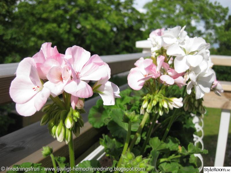 balkong,blommor,sommar,pelagon