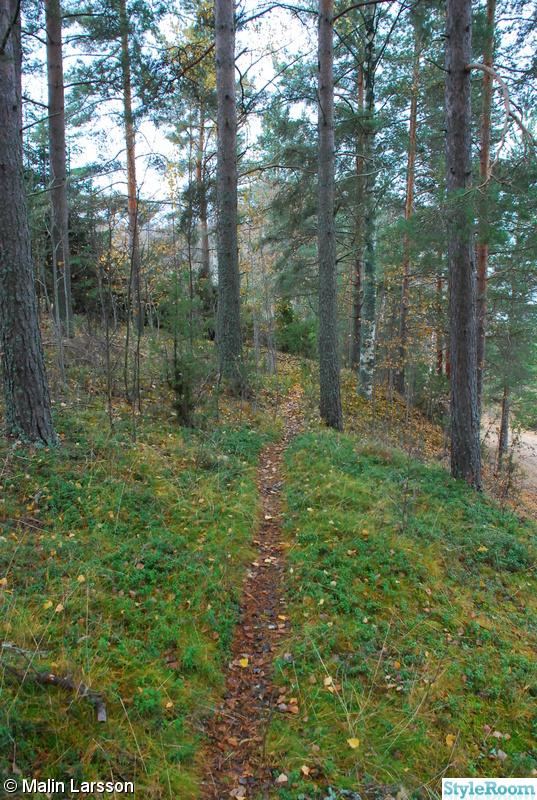 185481 skog