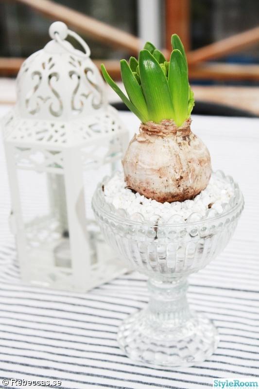 hyacint,marimekkoskål
