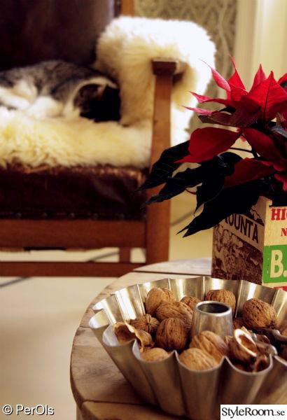 jul,katt,fårskinnsfäll,julstjärna,teburk