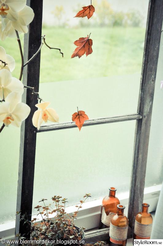 fönster,höstlov,orkidé,höst,gammalt fönster