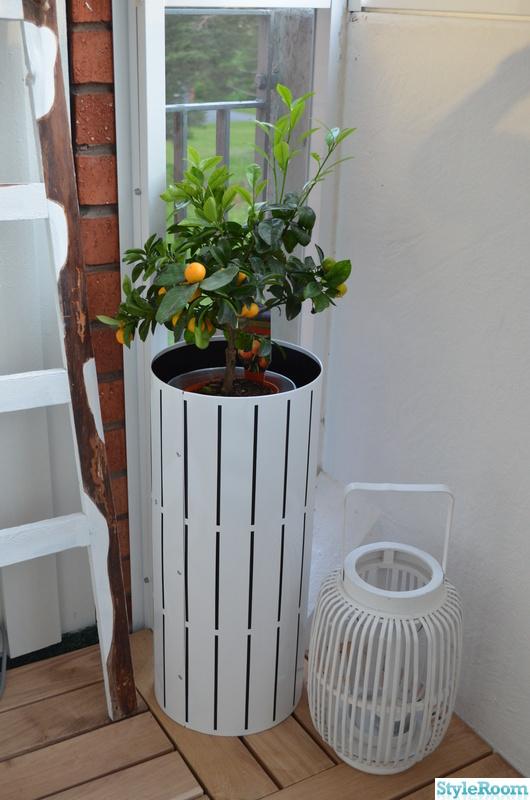 citrusplanta,balkong,lykta