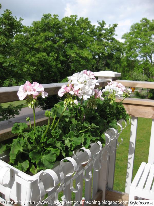 balkong,sommar,blomlåda,pelagon