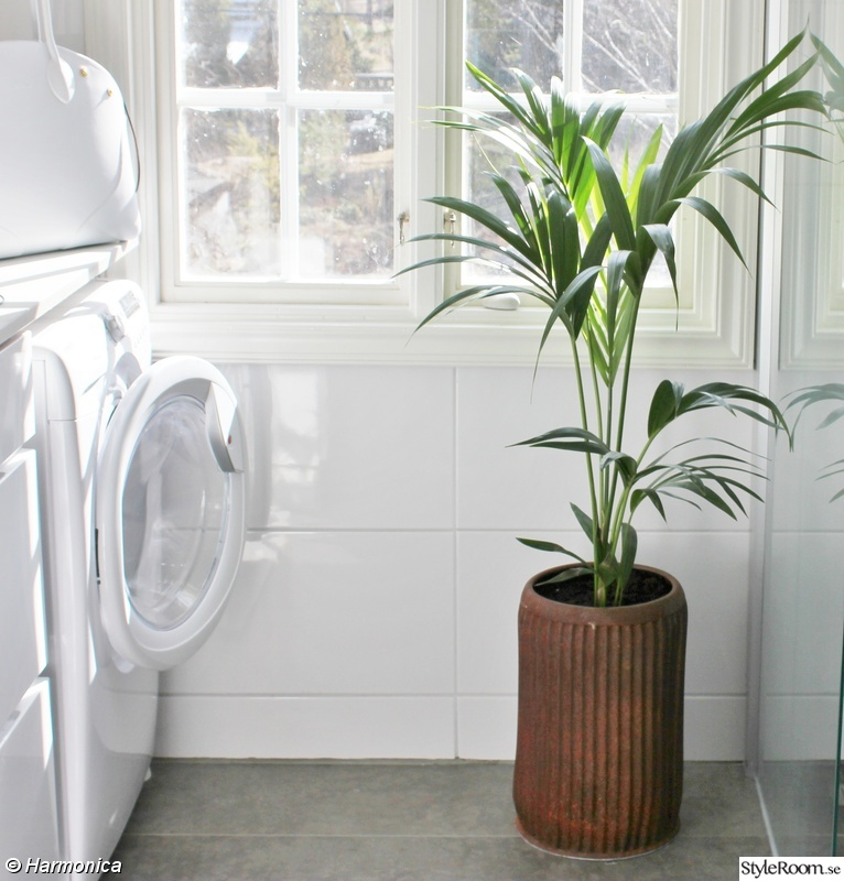 palm,blomma,rostig tunna