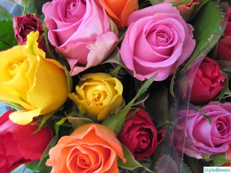 rosor,färger,blandade