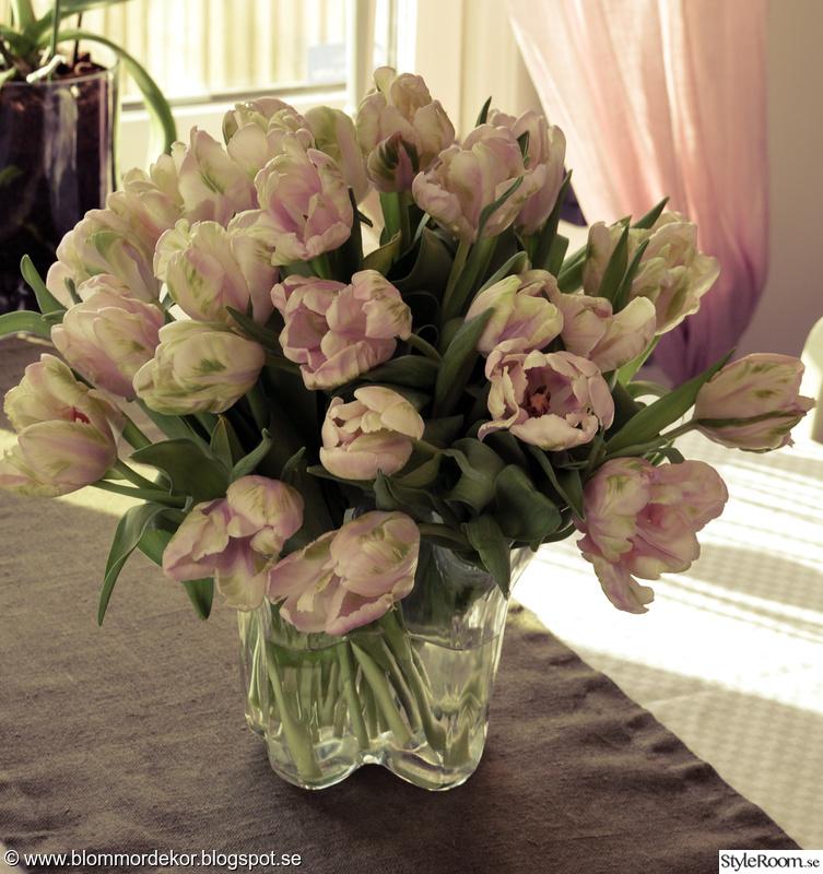 blommor,tulpaner