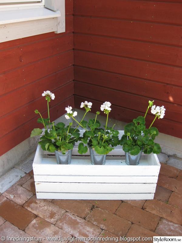 trädgård,sommar,pelagoner