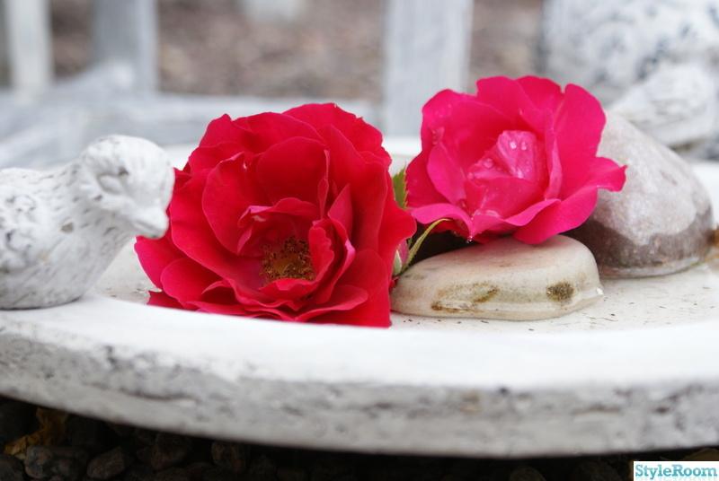 trädgård,stugan,fågelbad,rosorbetong