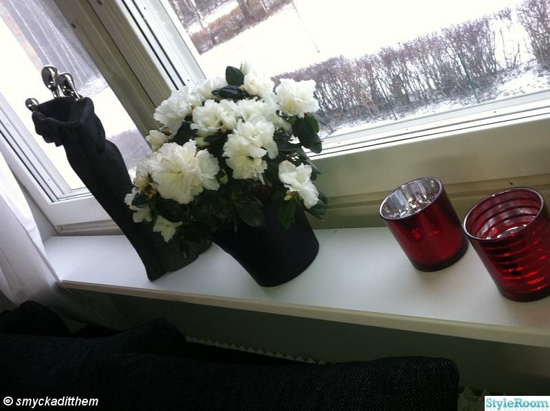 ljuslykta,silver,svart,vinrött,blomma