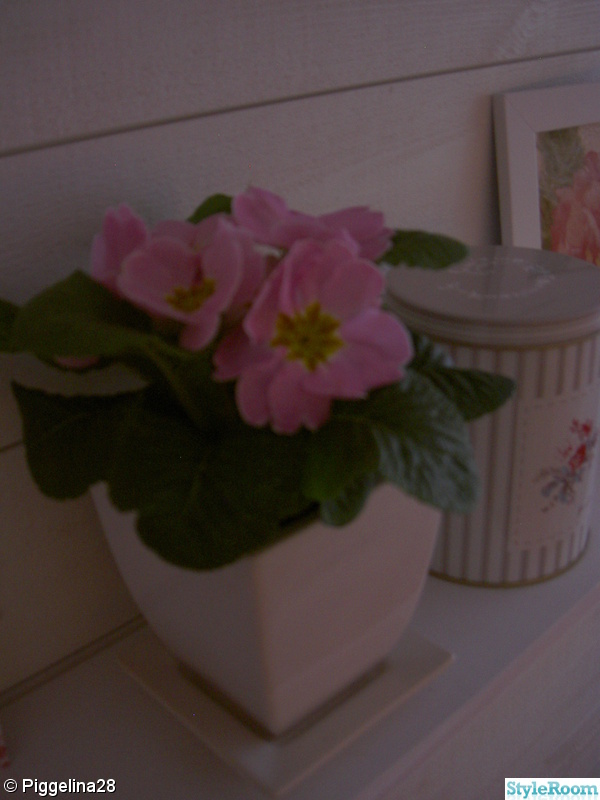 rosa,blommor,lantligt,burk,greengate