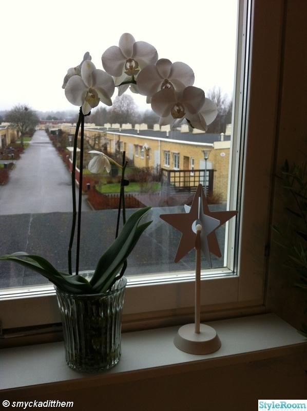 fönster,orkidee,stjärna