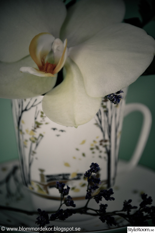 blommor,orkidé,kaffekoppar,fat