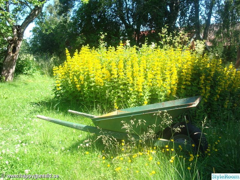 blommor,trädgård,lantligt,skottkärra