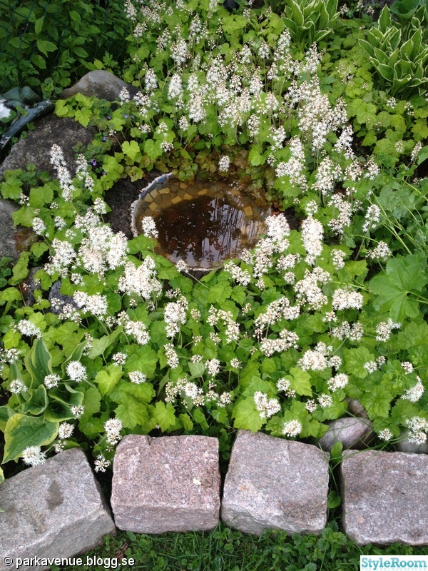 blommor,trädgård,vita,stenar,fågelbad