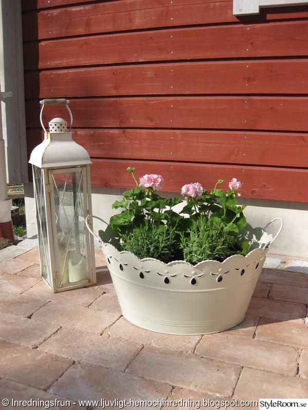 ljuslykta,blommor,trädgård,sommar,pelagoner