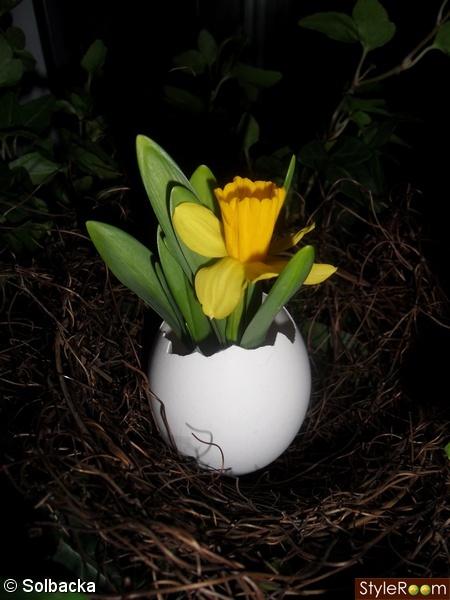 påsklilja,ägg,fågelbo,växt,grön