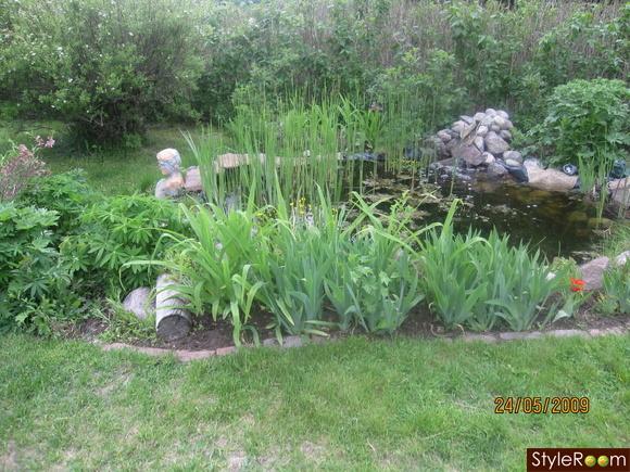 trädgård,damm,grodor,paddor