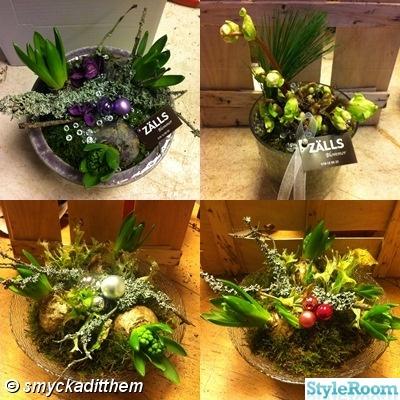 julplanterin julkulorg,jul,advent,julblommor,blommor