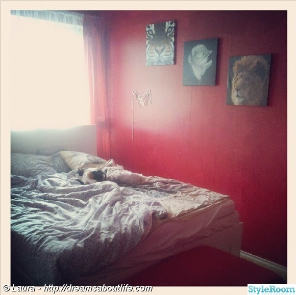 Bild på katt Rött sovrum av popinopka