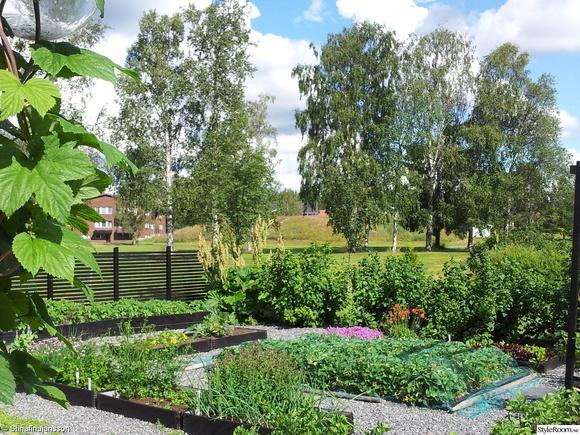 trädgårdsland,köksträdgård