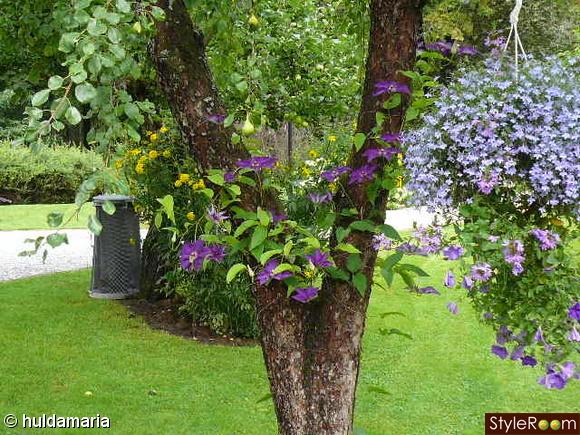 trädgårdsblommor,trädgård
