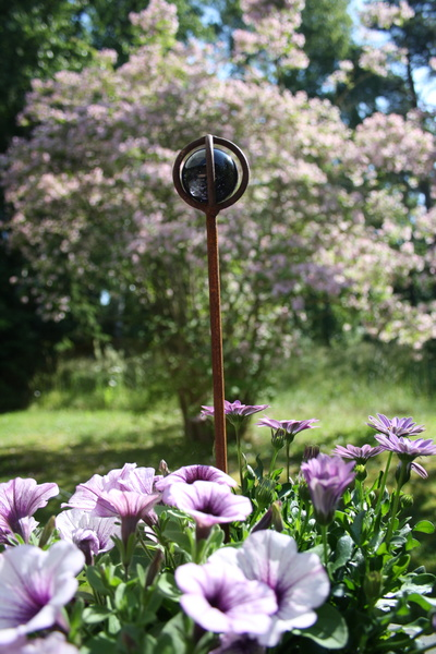 petunia,rost,lila,glaskula