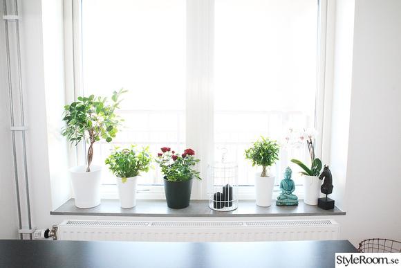 blommor,kök,fönster,köksfönster,köksfönster dekoration