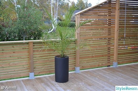 staket,palm