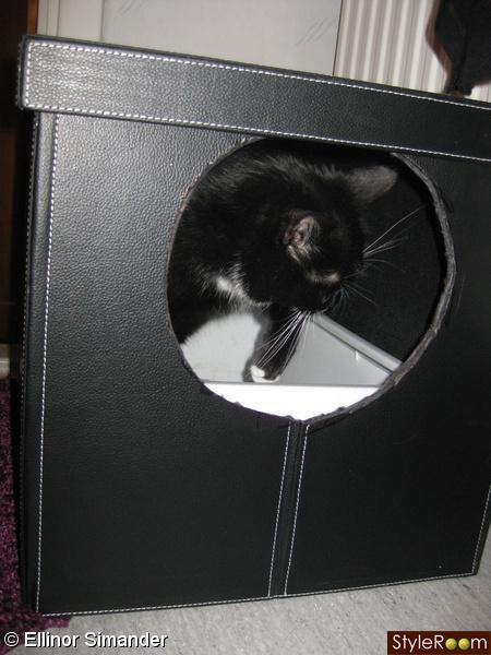 kattlåda,sandlåda,katt,rusta,badrum